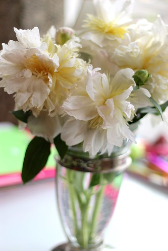Peonies, rescued from the storm