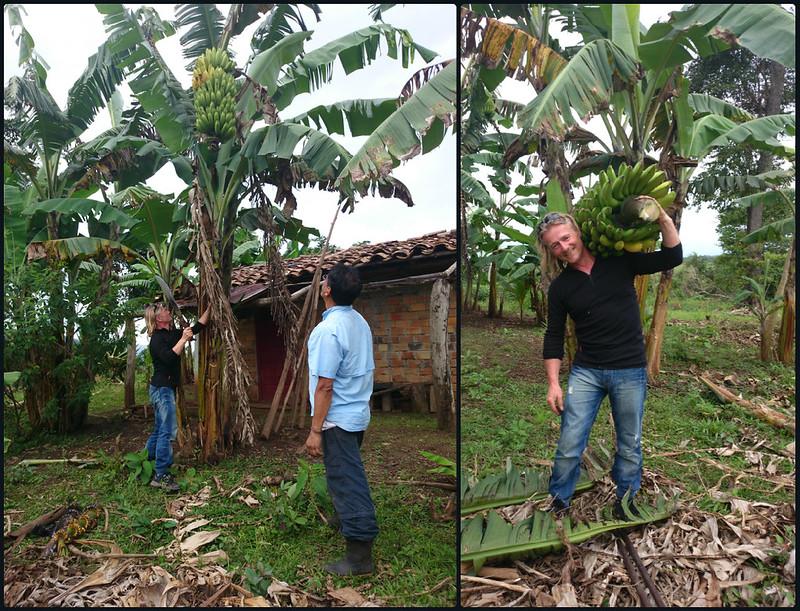 Liberating bananas