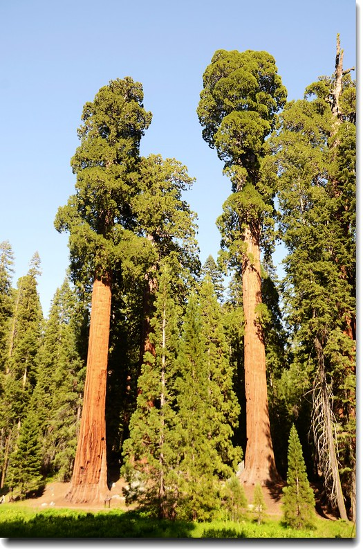 Giant Forest, Sequoia National Park 6