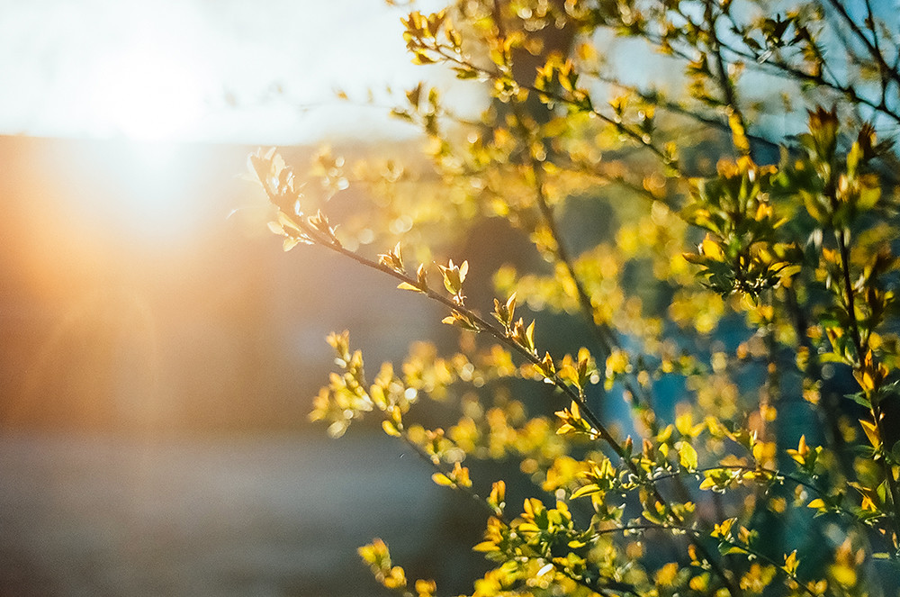 Walk in spring
