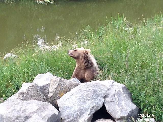Muenchen_Wildpark_Poing_Juni_2014_109