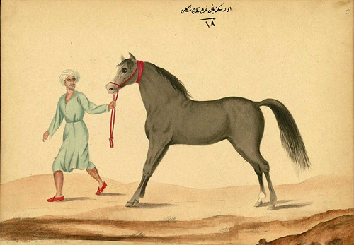 007- Un caballo con las venas de las pantorrillas hinchadas Walters manuscrito W.661- fol 81 a.