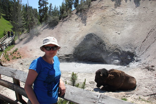 Mud Volcano and a Bison