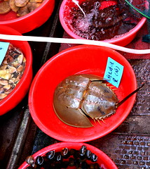在金門的市場上可見販賣的鱟。(攝影:呂東杰)