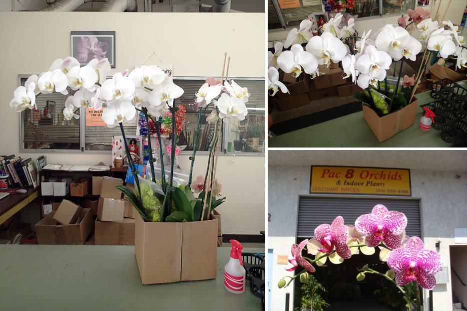 051314_orchids02