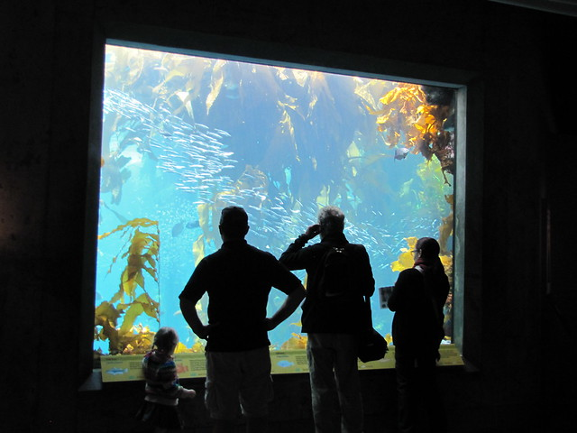 Kelp Forest Exhibit at the Monterey Bay Aquarium