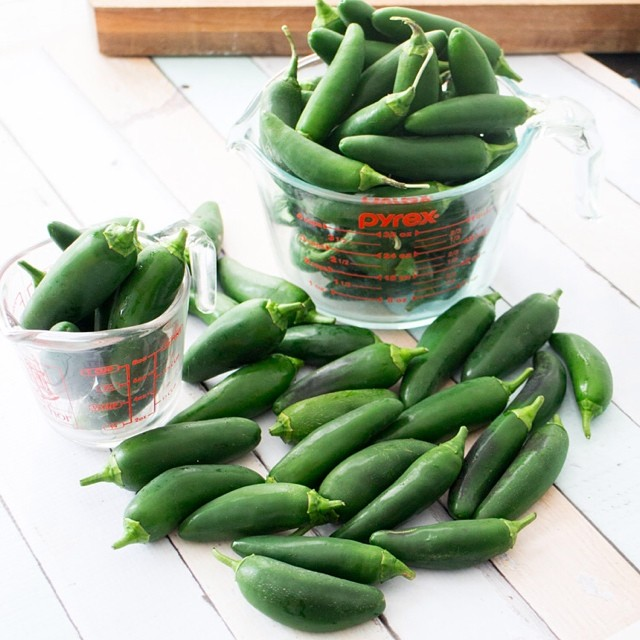 The Jalapenos keep coming! To get an idea of how many we're picking, that's a 4 cup container filled, a 1 cup container filled and a few more cups that can't fit in.  Jalapenos are crazy! #jalapeno #jalapenos #peppers #hot #heat #green #fresh #vegetablega