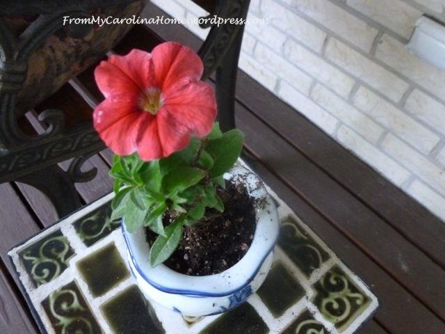 July1-petunia