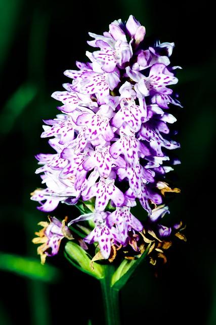2014:07:10 - Glasgow Botanic Gardens - Sigma 180mm Macro - 009