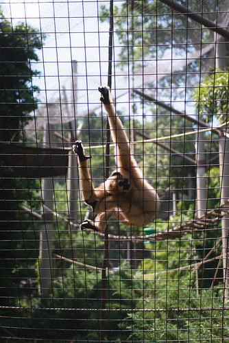 National Zoo -3