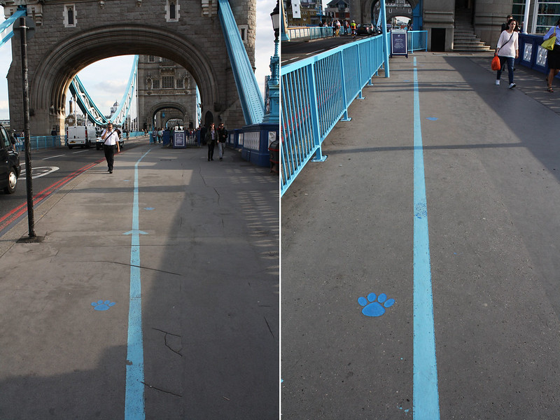 The London Project Tower Bridge blue pawprints