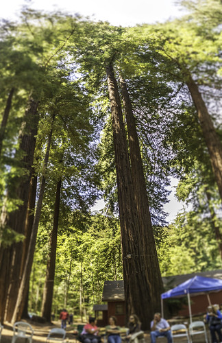 Chilling Under the Redwood Trees by Geoff Livingston
