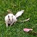 White Squirrel by EmperorNorton47