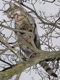 Cat Chewing Twig on Tree