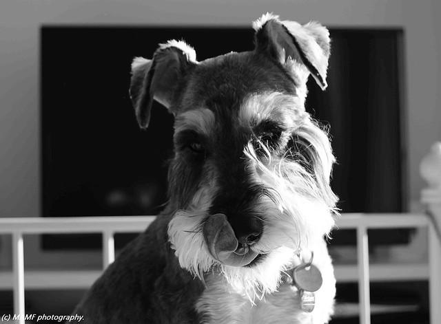 Millie.