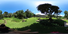 The Ulupo Heiau as seen from the Ulupo Lo'i (Taro Field) - a 360 degree Equirectangular VR