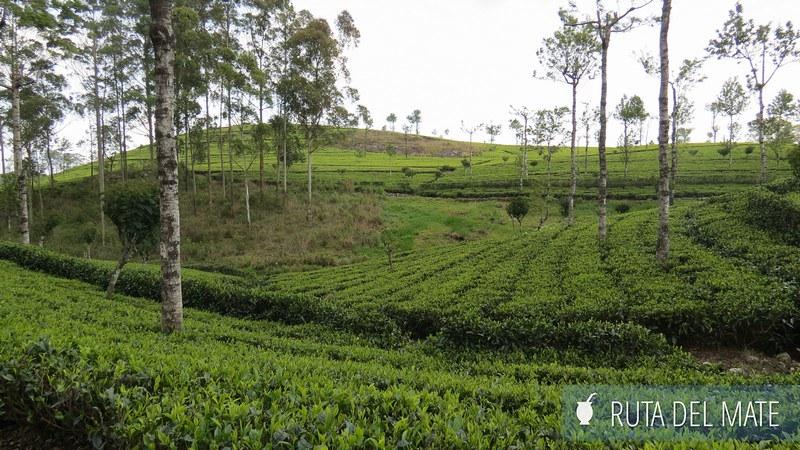 Haputale Sri Lanka (20)