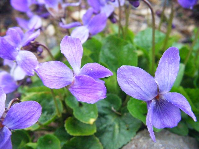 Et les violettes elles-m, Fujifilm FinePix Z10fd