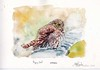 2017 0326 Pigmy Owl