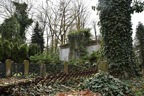 ivy green nature tree grave tomb graveyard cemetery plants łódź lodz polska poland theoldcemeteryinłódź starycmentarzwłodzi