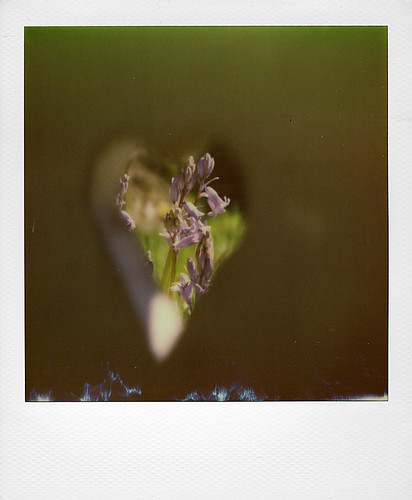 Hyacinth ...