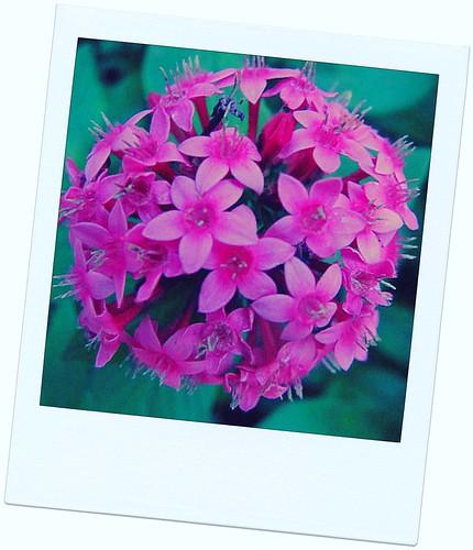 PT-Flowers2