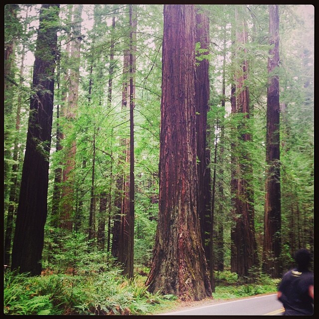 The Redwoods were completely amazing. Thanks so much for all your sweet encouragement!