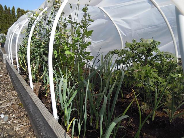 Apr 13 garden
