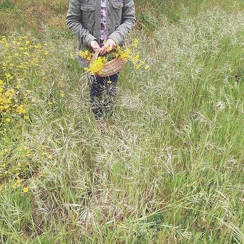 A liberdade a correr pelos campos