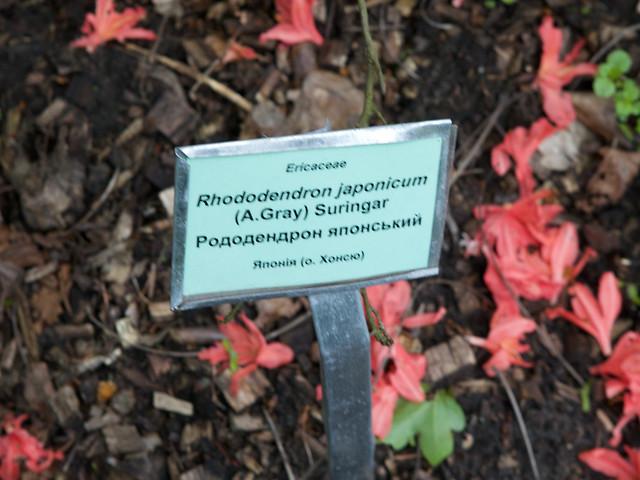 flower nameboard