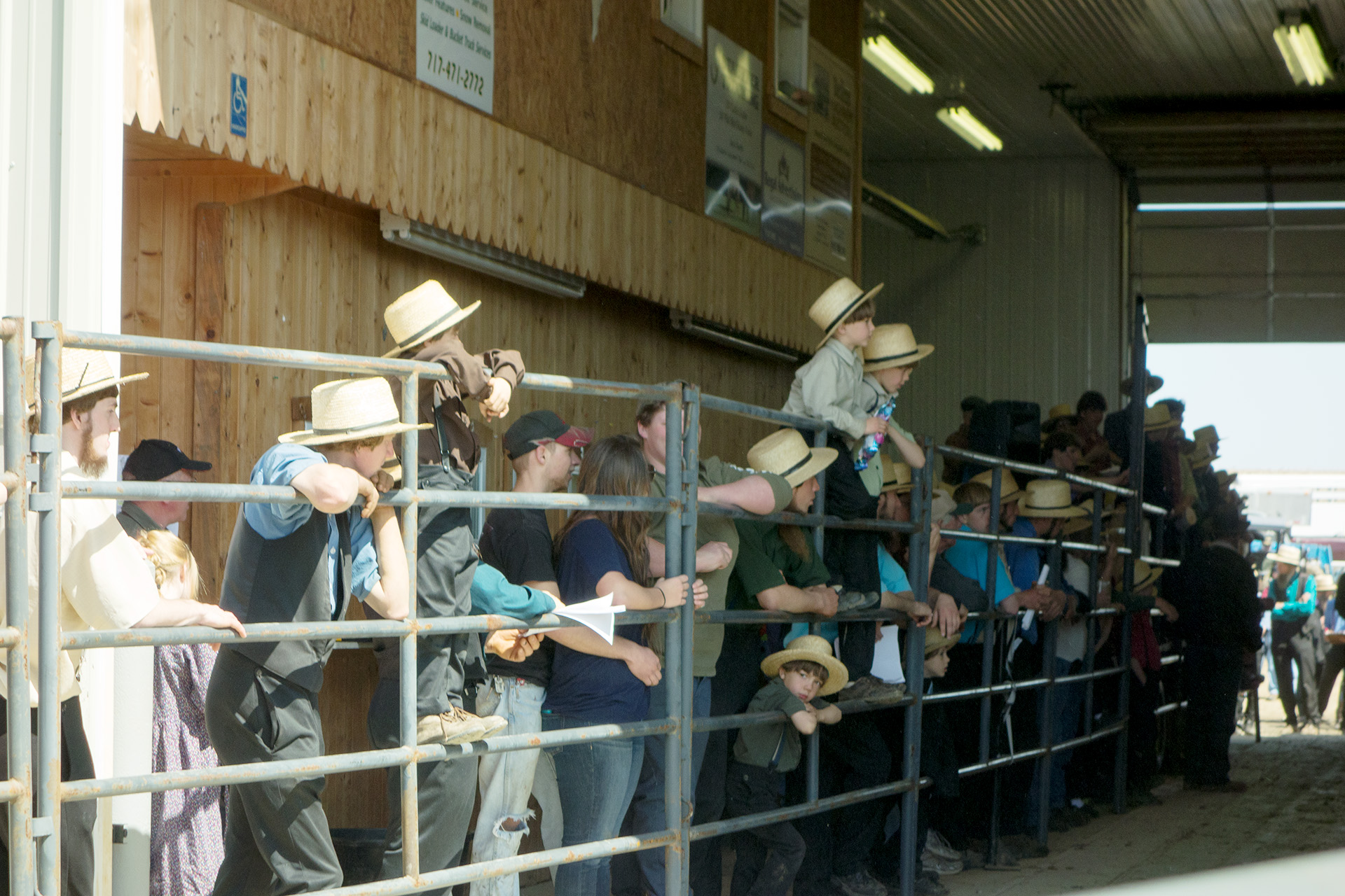 Spectators anxiously awaiting the next horse up for bid.