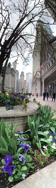 Chicago flowers, fog, architecture, tourists