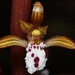 Spotted coralroot orchid flower