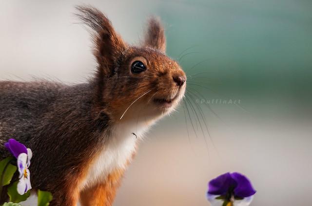 Do I Smell Nuts?