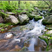 Small photo of Rocky Stream