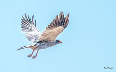 Etosha birds