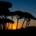 Sunset time by tom.leuzi