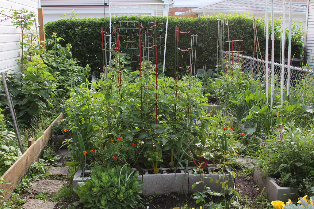 My tomatoes photos for Garden room 2x3