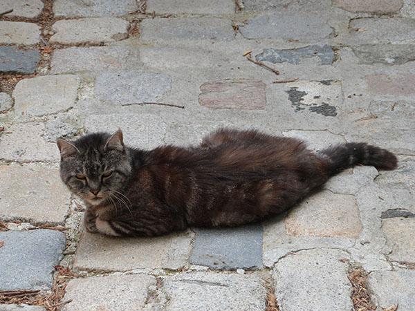 le chat de belgentier