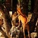 ,, Wildlife ,, by Jon in Thailand