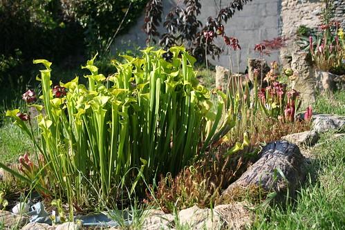 plantes2014 098