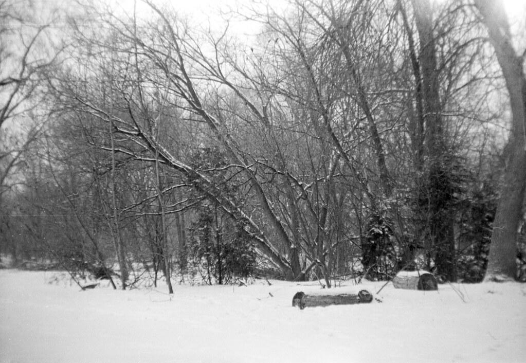 Frozen Log Benches