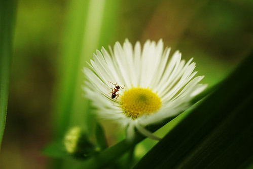 Ant&Flower