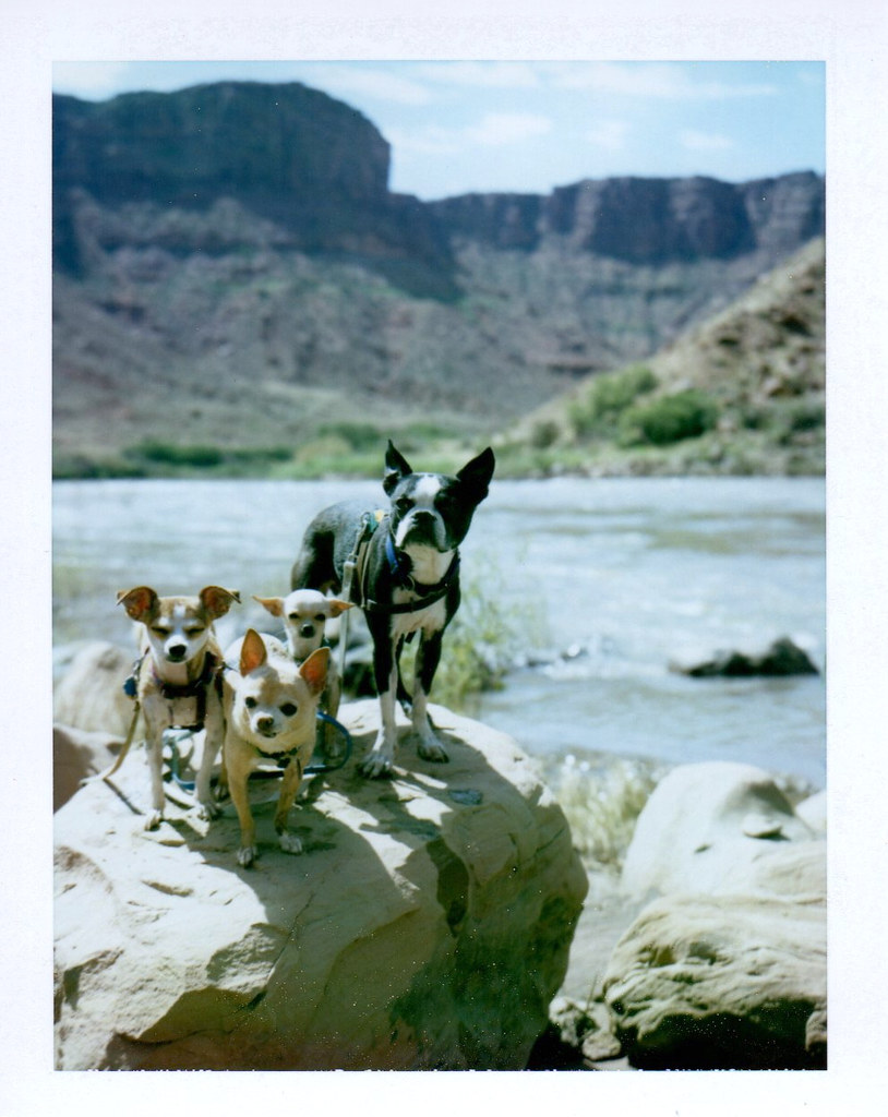 6 24 my new favorite group photo of the dogs - at colorado river along utah highway 128