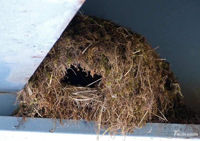 P1070983 - Nest
