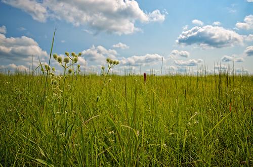 nature lawrence weeds ks kansas kansasuniversity