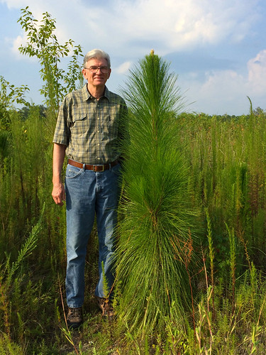 Tim Allen stands by one young seedling that has managed to grow 6 feet tall. He credits the containerized planting method for the tree's rapid growth. Courtesy: Michelle Stone