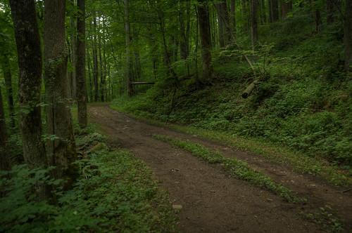 road summer green nature forest landscape virginia nationalpark nikon unitedstates outdoor hiking shenandoah hdr crozet d300 landscapephotography 18200mm photomatix brownsgap