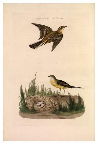 012-Lavandera amarilla- Nederlandsche vogelen- Nationale bibliotheek van Nederland