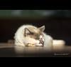 Segunda-feira dá uma preguiça... by Adriana Casellato